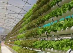 Sprinkler technology for artificial vegetable garden